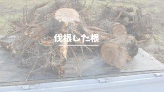 伐根、桃の根