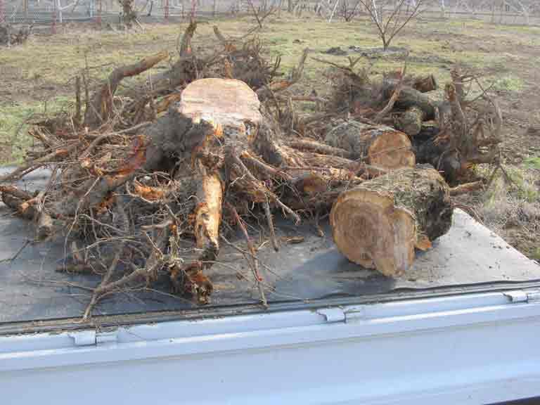 伐根した根を軽トラで運ぶ