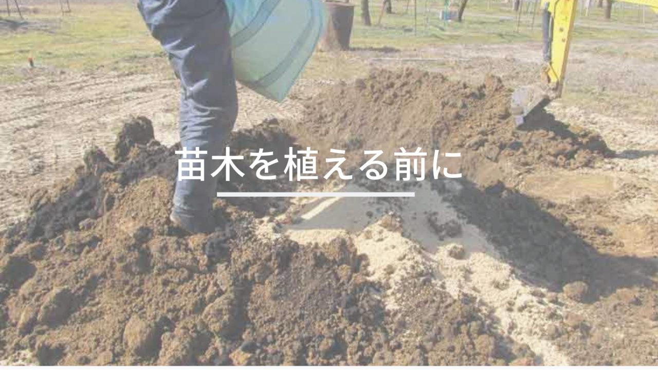 苗木を植える所に